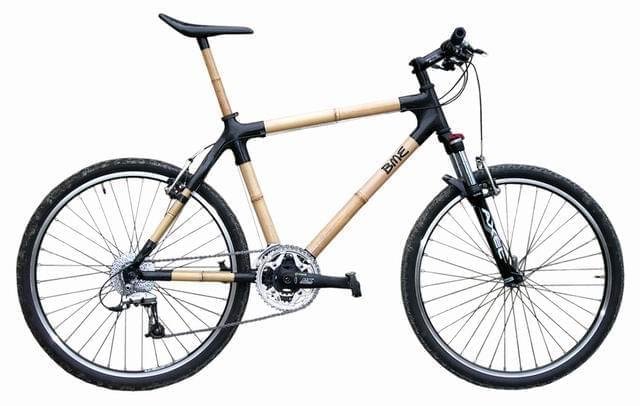 z bambusa