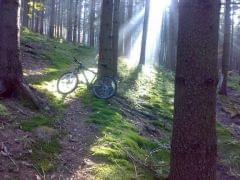 W lesie 3
