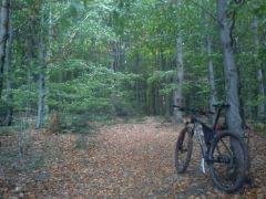 Bukowy las północny stok ŚPN