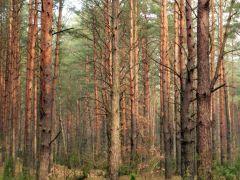 Las w Dąbkowiźnie