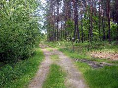 Las w gminie Strachówka
