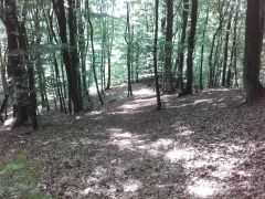 22.05 - Lasy w Luzinie - pomyliłem trasy :)