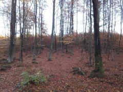 29.10 - Jesień w lesie