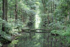 Kraina Spreewaldu, czyli Lasu Sprewaldzkiego, pelna kanalow i bagien