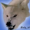 Bialy_Wilk